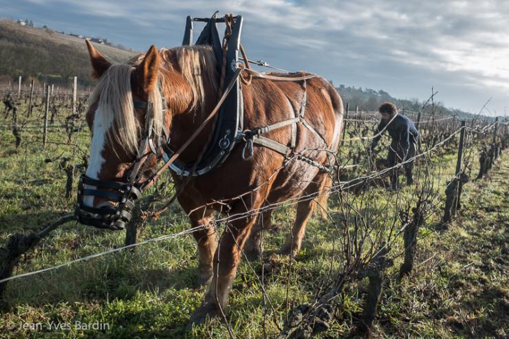 Loire valley organic tour